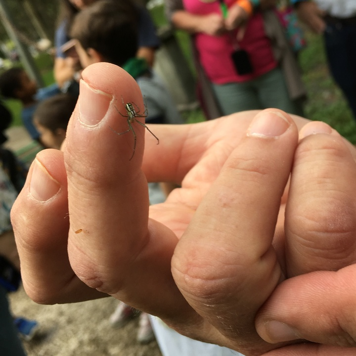 Participants got to hold insects, like this Argyra Orchard Orbweaver