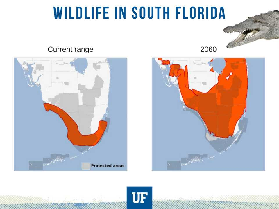 Endangered Species of Florida in the Face of Climate Change.